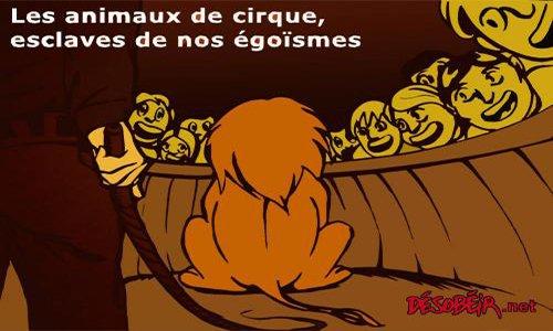 Pétition : Pour des cirques sans animaux à Rodez