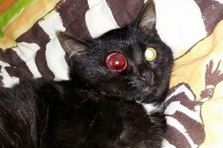 Couvin: frappé violemment, le chat risque de perdre son œil