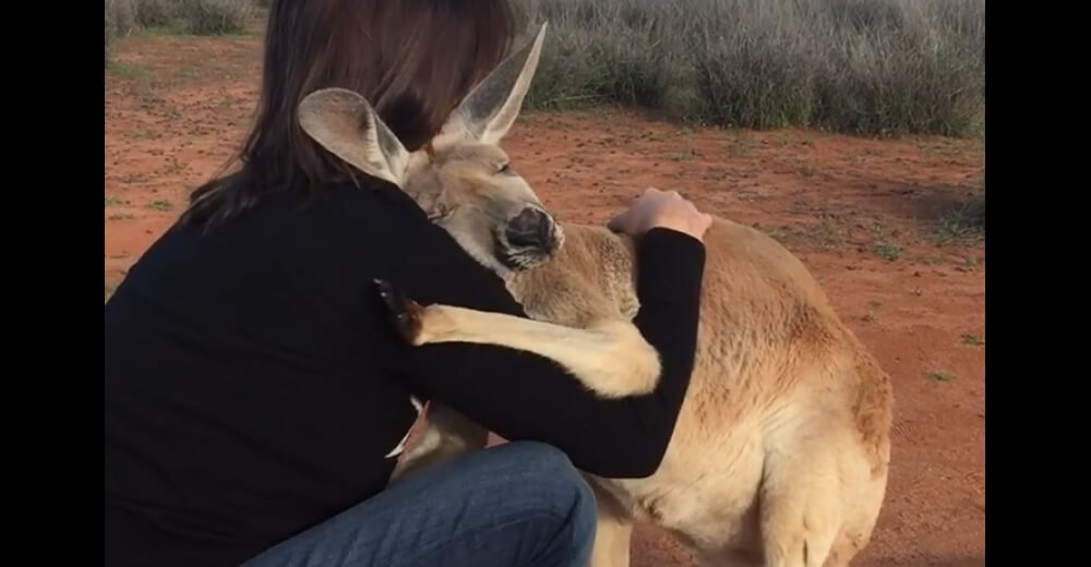 Rescued Kangaroo Shows Her Gratitude Every Morning And It's The Absolute Best Thing To See