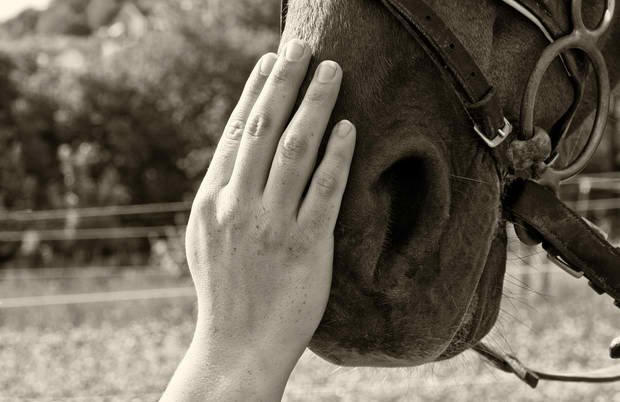 The Incredible Healing Power Of A Horse - LiteracyBase