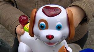 Bobby, le petit chien indigne une maman - Vidéo - RTL Vidéos