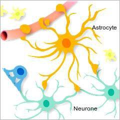 Parkinson: des cellules reprogrammées remplacent les neurones détruits par la maladie