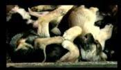 "L'ADCC lance :le projet Canin Variants Breeding"""