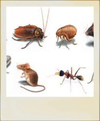 pestcontrolmanhattan - Homepage