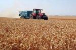 Les denrées agricoles repartent à la hausse