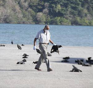 Caraïbes : 190 oiseaux meurent en plein vol, le mystère demeure entier