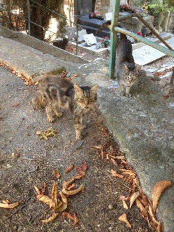 ACTU Animaux - SOS Euthanasie à Marseille : les chats du cimetière en grand danger, massacre à éviter avant le 31 juillet 2017