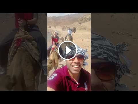 Video - Tourist Records His Adventure In Camel Dahab Beach Walk - DiziVizi.com