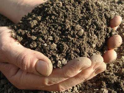 Analyse du sol, facile, gratuite, à faire vous même - Le Jardin des Médicinales