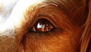 Pétition : En mémoire de Marante, jeune chienne assassinée