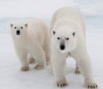 Devenez défenseur de l'Arctique !