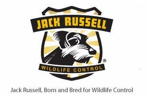 Wildlife Control | Galvin, WA | Jack Russell Wildlife Control