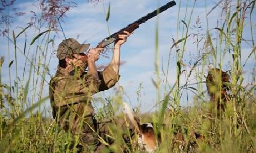 Pétition : Réagir face aux abus de la chasse. Agir pour faire changer la loi.