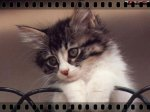le blog de animals-dog