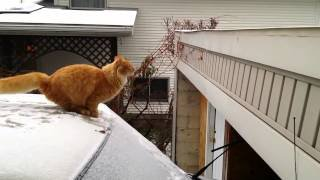 Chat 'sss neige - YouTube