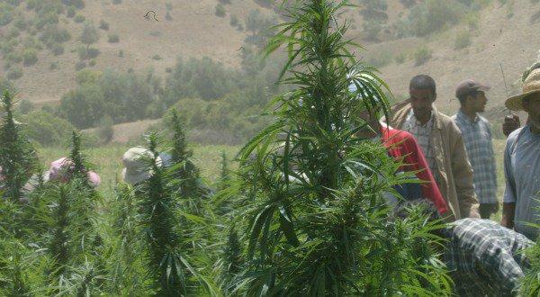 Comment le Maroc est devenu le royaume du cannabis | Slate Afrique