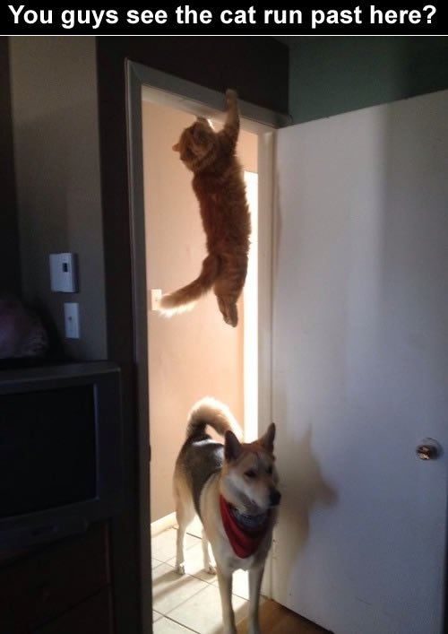 Funny cats:A cat is playing peekaboo with dog.