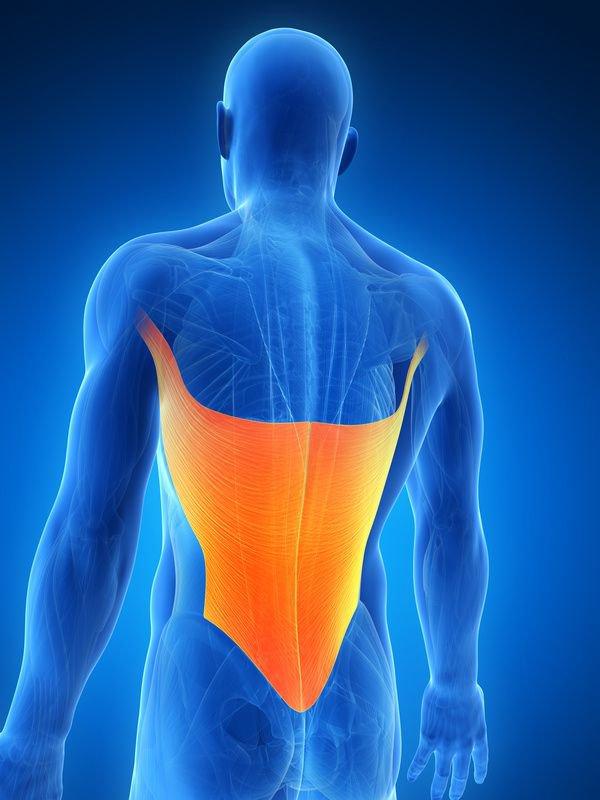 Encuentre sus Lats ... Así usted podrá desactivarlas y liberarse de dolores de espalda y hombro - El Blog de la Salud | Suplementos Deportivos