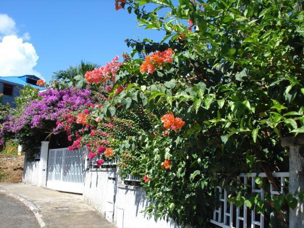 GITE CALME ET SECURISE - Guadeloupe, Zone DOM-TOM - Chezmatante.fr