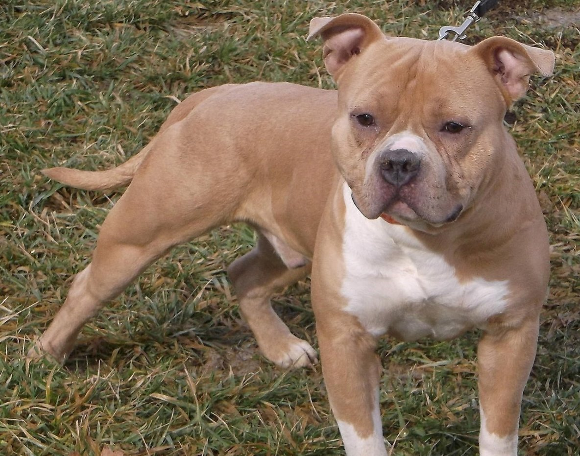 Il battait son chien avec une équerre métallique à Bussy : 15 points de suture pour l'animal