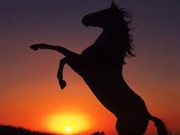 toutsur-les-chevaux
