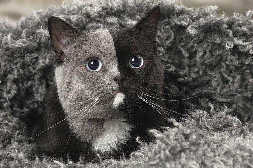Rare chaton né avec «deux visages» ~
