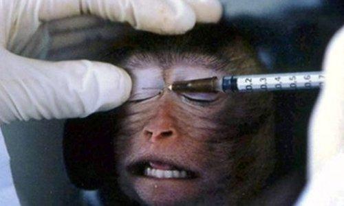Pétition : Pour un débat national sur l'expérimentation animale