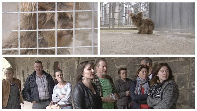 Laon (02) : mobilisation contre la maltraitance animale - France 3 Hauts-de-France