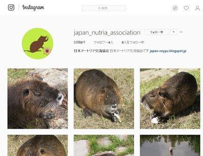 ヌートリア --- 日本ヌートリア交流協会公式ブログ ---: Instagram始めました