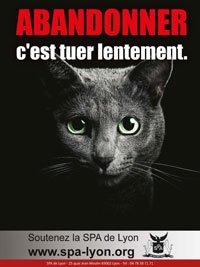 Abandonner son chat est un délit punissable de prison.