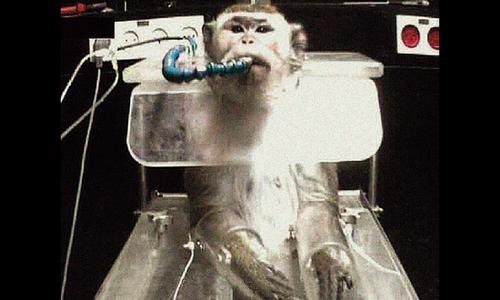 Trouvez-vous acceptable d'expérimenter sur des primates pour mieux comprendre le fonctionnement du vivant ???