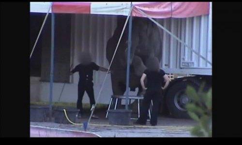Pétition : Les Services Vétérinaires doivent interdire la venue de la famille Folco et de ses éléphants en France.