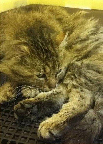 ACTU Animaux - Mathéo, chat accidenté, bassin fracturé