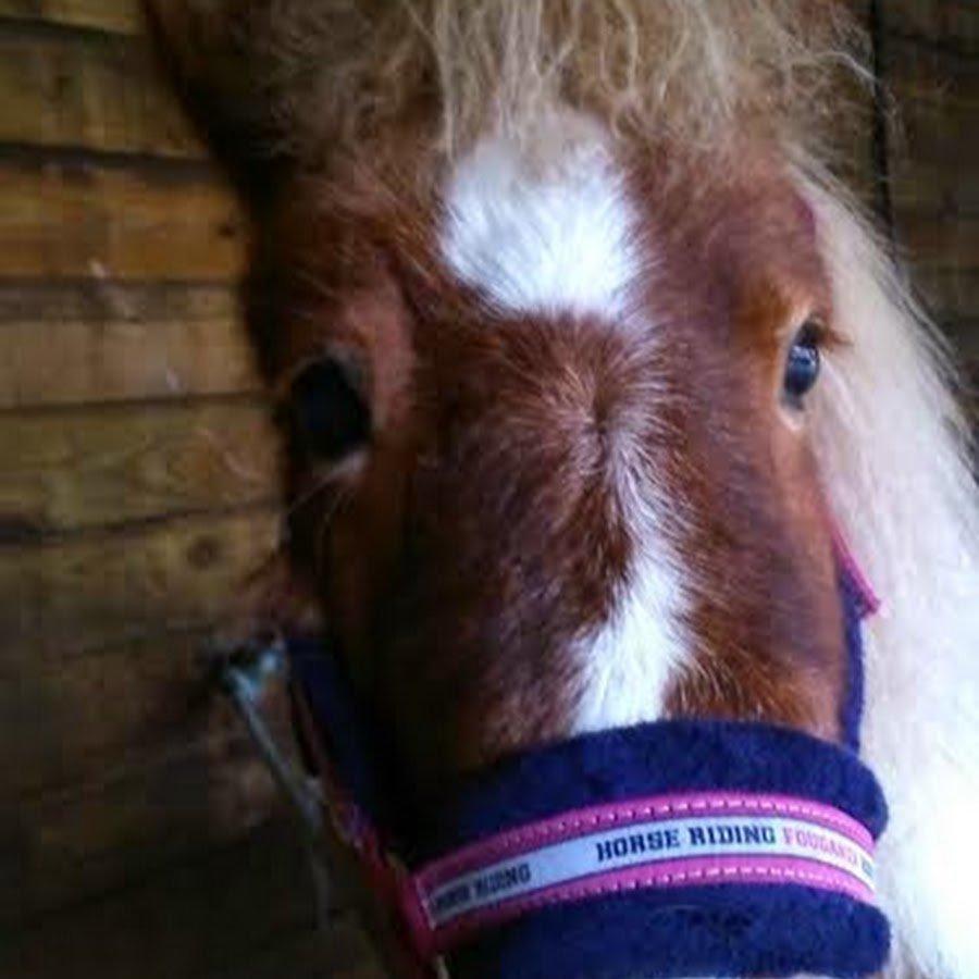 Débat n°1 : Une selle quand on a pas de cheval (pour youtube)