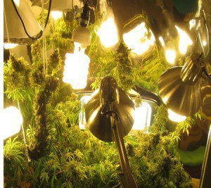 Growing Indoors - Marijuana