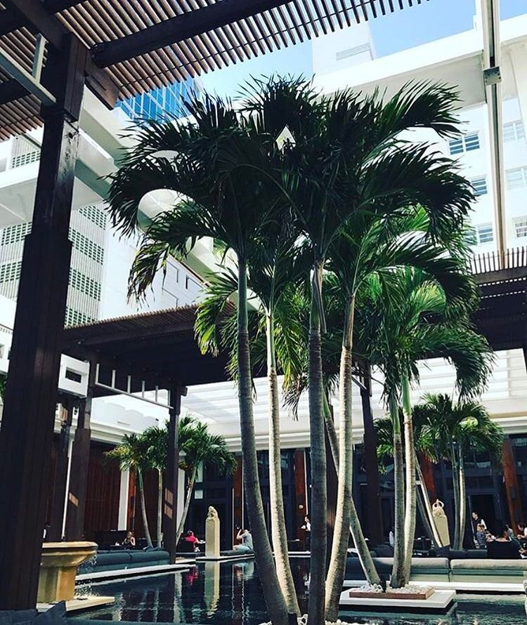 Instagram post by Sophie Alexander • Apr 25, 2017 at 6:43pm UTC