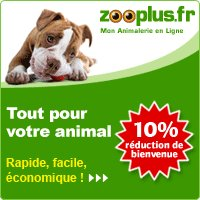 SHPA Le Havre, site officiel | Association Havraise de Protection des Animaux | Adoptez un chien ou un chat au Havre