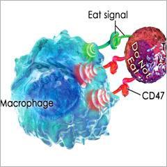 Cancer: découverte d'un marqueur d'efficacité potentielle de l'immunothérapie