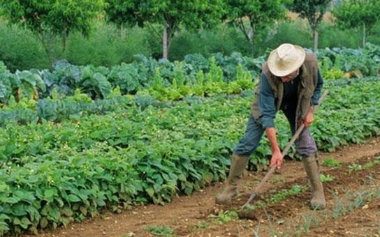 Cultiver son jardin pourrait devenir un acte criminel