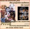 Les animaux sont pas des jouets. - Blog de Chtibiloute59 - Blog de Chtibiloute59