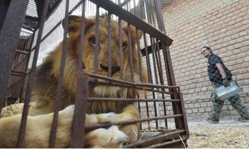 Pétition : Pour l'interdiction des cirques avec animaux à Doullens