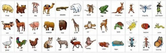 Nama Hewan dalam Bahasa Inggris (dari A-Z) | Pustaka Ilmu