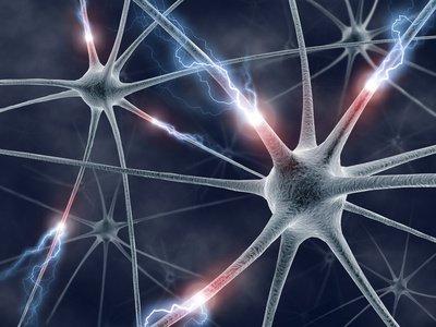 ICI Institut coaching et inconscient Qu'ont fait pour vous, vos neurones miroirs, aujourd'hui? - ICI Institut coaching et inconscient