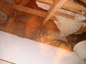 destruction nid de guêpes Nord Pas de Calais - PREV SECURITE 62