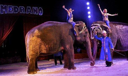 Pétition : Pour l'annulation de l'autorisation d'installation du Cirque Medrano sur notre commune, Perpignan