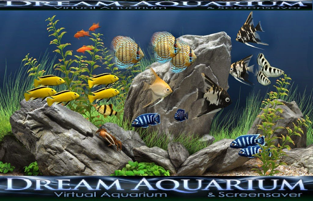 Dream Aquarium Computer OR Desktop Screensaver Full Version Free Download with Crack And Key ~ Office Password Recovery