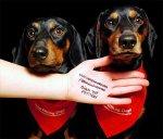 Arrêtez de Tuer des Chiens - la pétition pour arrêter la torture brutale des chiens et la consommation de viande de chien en Corée du Sud