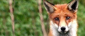 Pétition Pour la pénalisation des maltraitances sur animaux sauvages,campagne Pour la pénalisation des maltraitances sur animaux sauvages