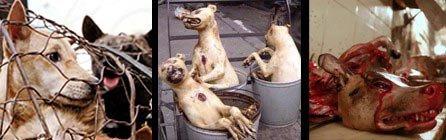 Non au Festival de YULIN ! Non à la consommation de chiens et de chats ! | Fondation Brigitte Bardot