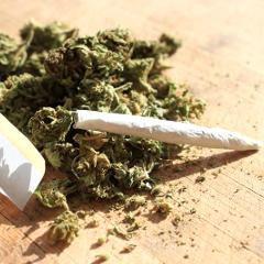 Quel impact de la légalisation du cannabis sur la consommation des adolescents?
